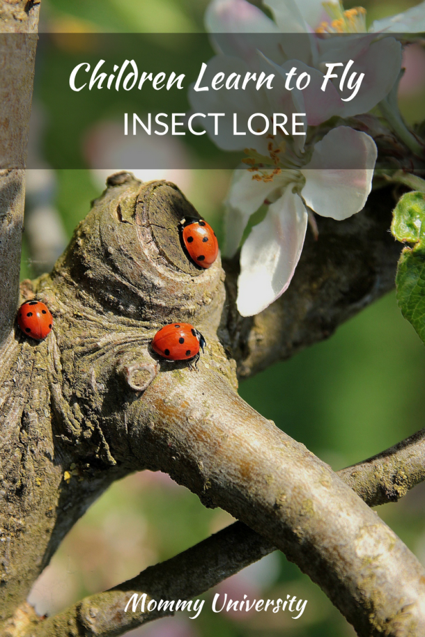 Children Learn to Fly with Insect Lore