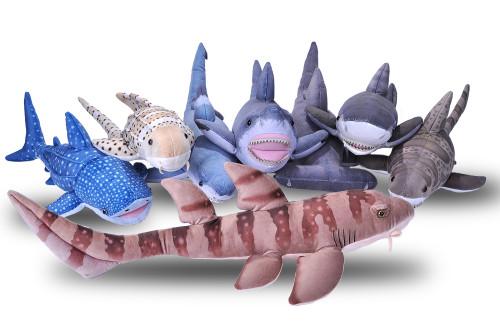 Living Ocean Sharks