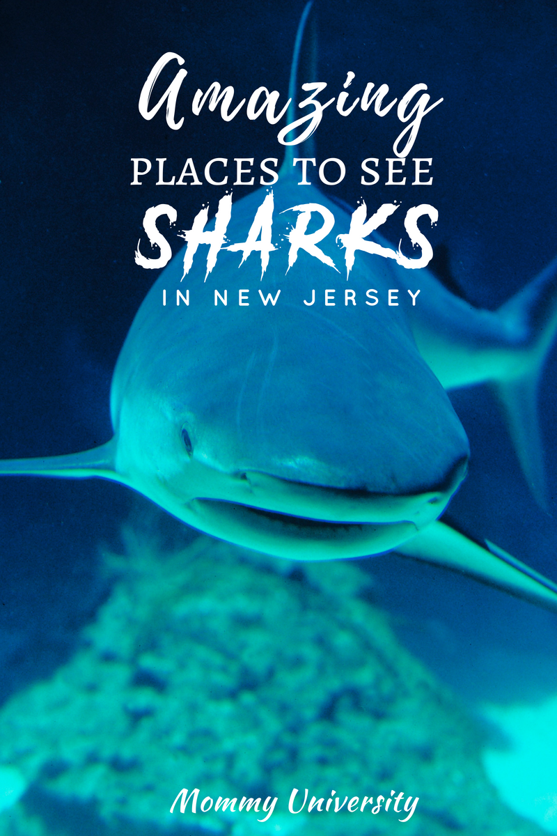 Amazing Places to See Sharks in New Jersey