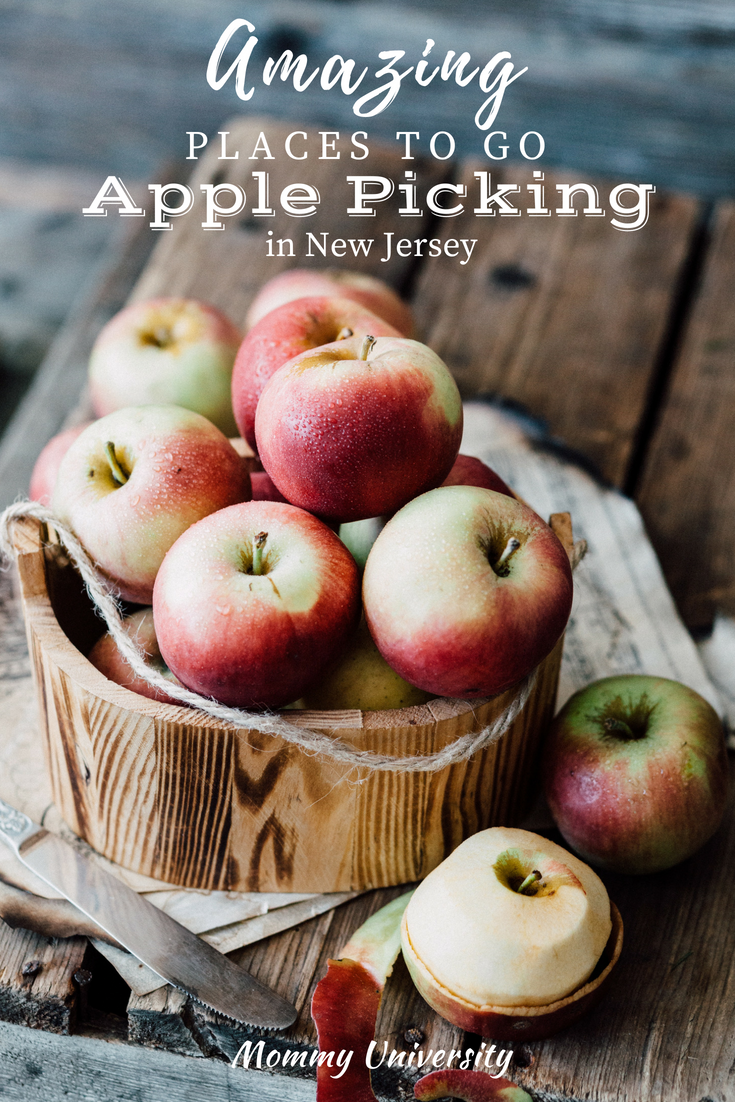 Amazing Places To Go Apple Picking In New Jersey Mommy University