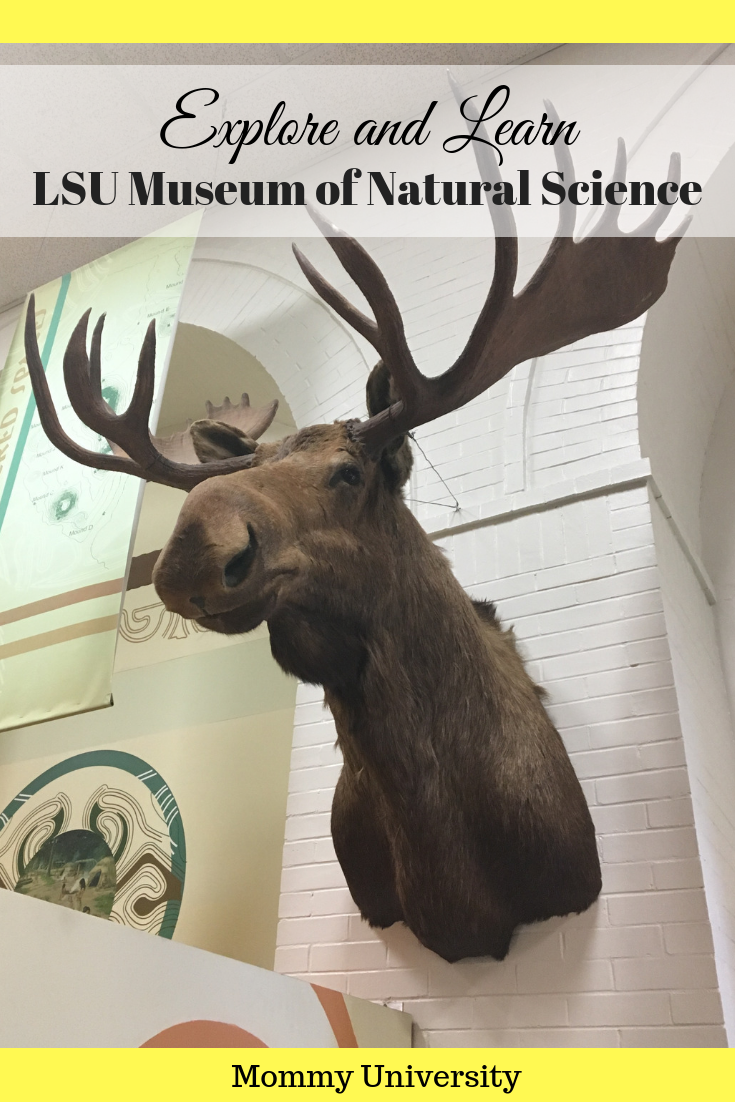 Explore and Learn at LSU Museum of Natural Science