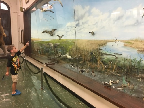 Bird Diorama at LSU Museum of Natural Science