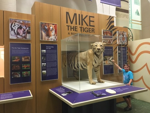 Mike the Tiger at LSU Museum of Natural Science