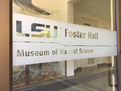 LSU Museum of Natural Science Hall