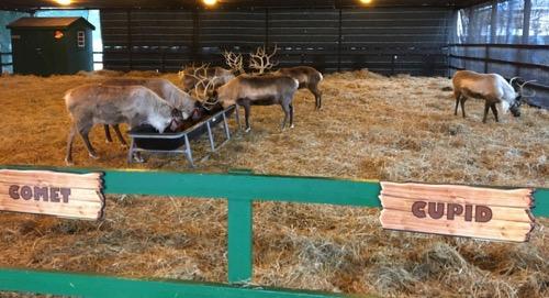 Santa's Reindeer at Hersheypark