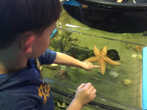 Touch Tank at LSC