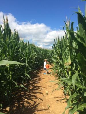 Alstede Farms Corn Maze