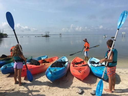 BK Adventures Dolphin & Manatee Tour
