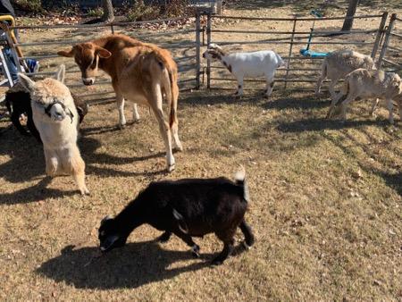 LSC Petting Zoo