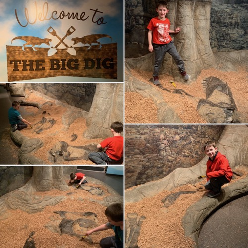 The Big Dig at The Academy of Natural Sciences