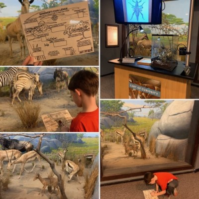 Serengeti Hunt at Night in the Museum