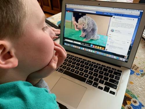 virtual animal encounter at the Cincinnati Zoo