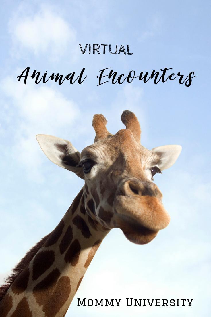Virtual Animal Encounters