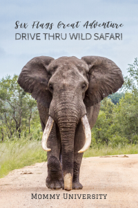 Six Flags Great Adventure Brings Back Drive Thru Wild Safari