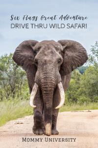 Six Flags Great Adventure Brings Back Drive Thru Wild Safari