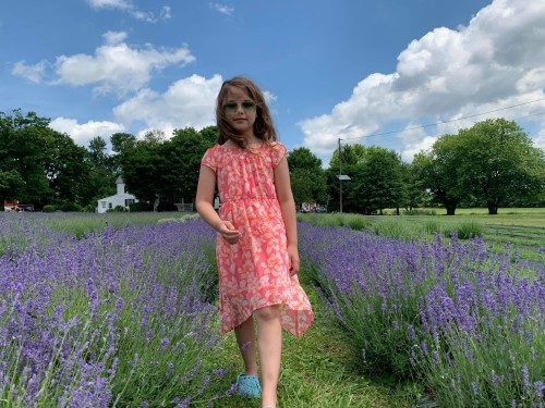 Hidden Spring Lavender Farm
