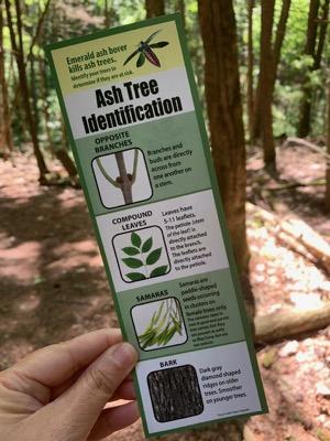 Tillman Ravine Ash Tree Brochure